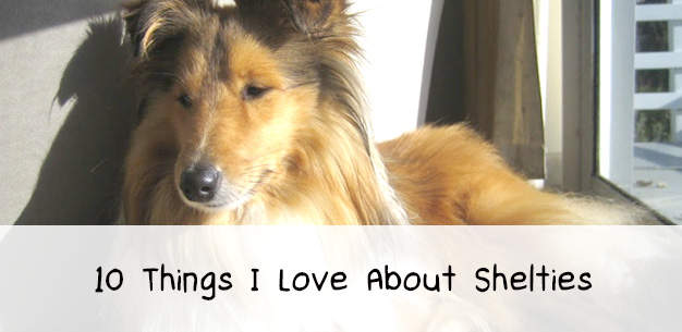 10 Things I Love About Shelties