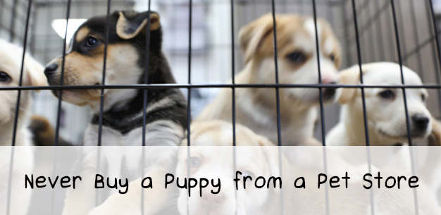 Why You Should Never Buy a Puppy From a Pet Store