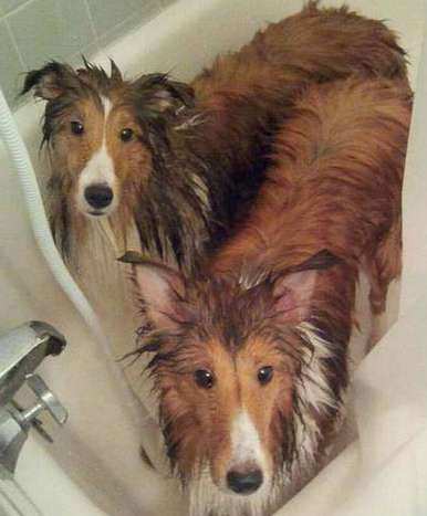 They are half their size when wet - by Jenn Gober Storm