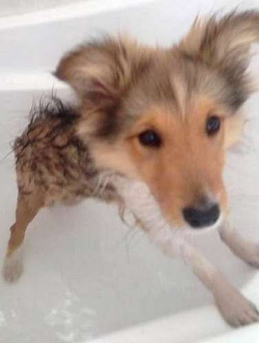 This is Munch in his first bath