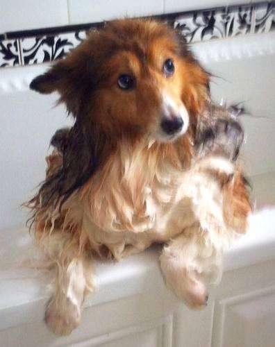 Foxy Fizzle in the bath! By Karen Massey
