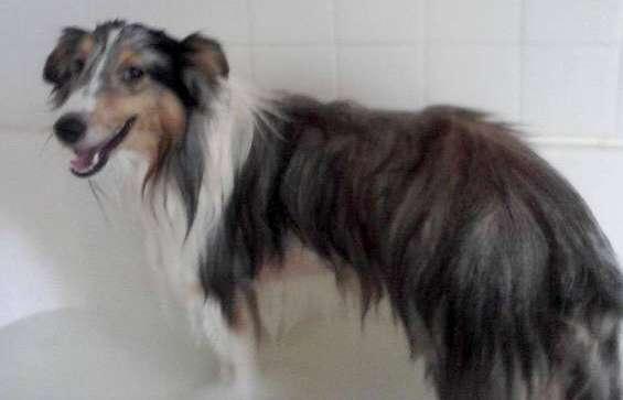 Chewy actually enjoying bath time