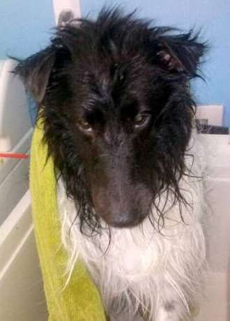 This is Kovu. He gives me the side eye and long face. We both hate doing baths for him! By Theo T. Le