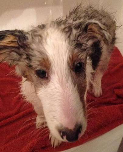 Milo's first bath. By Colleen Waddy Joseph