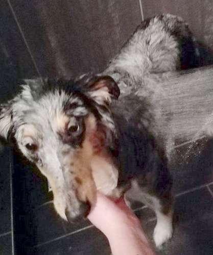 Luna loves bath time! Marion Teunissen