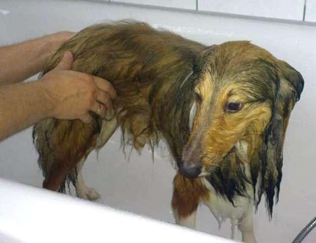 Bailey's first bath... By Marie-Jose Blaesen