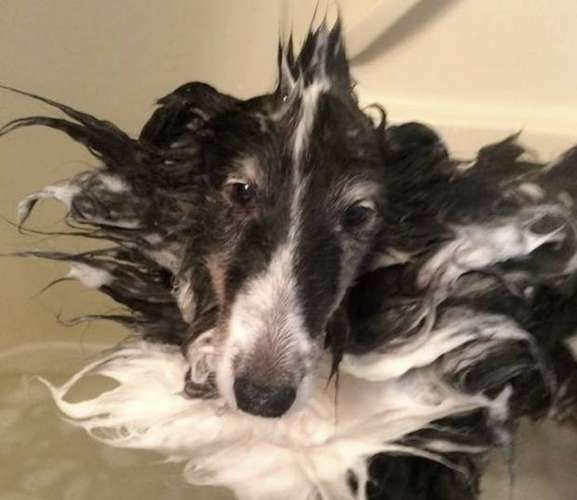 Skunker Butts in the tub! by Linda Smith Gierek