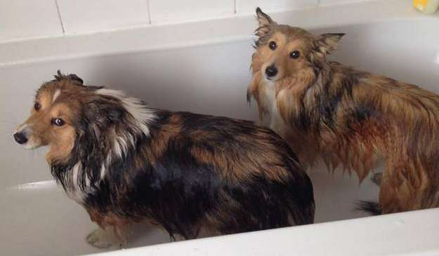 Holly and Crystal are not big fans of the bath! By Gillian Wood