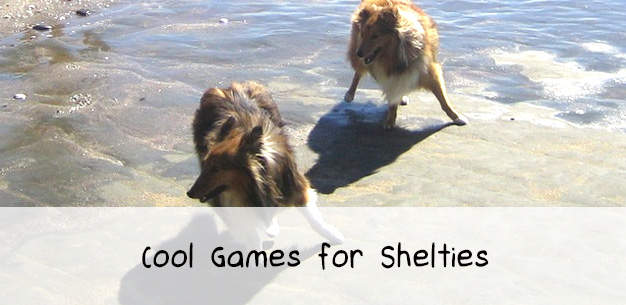 Cool Dog Games to Play with Shelties