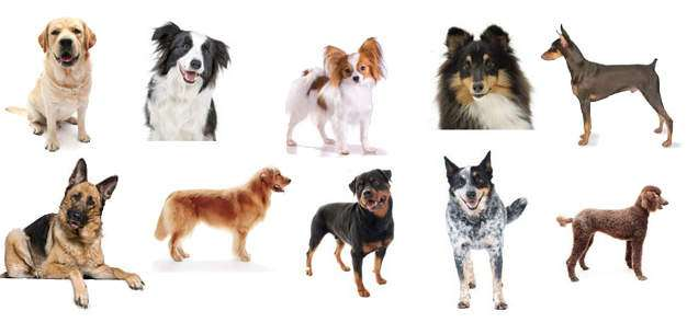 Different Dog Breeds Were Originally Bred to Have Different Temperaments