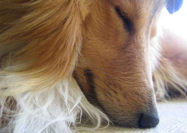 Dog Close-Up Photopgraph
