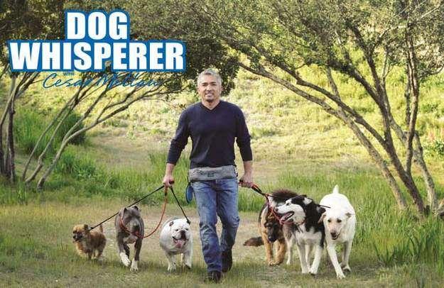 The Dog Whisperer Review