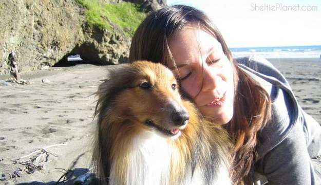 Take Care of Your Sheltie's Health