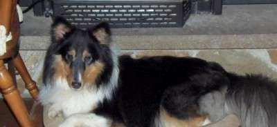 Finn Relaxes in His Favorite Spot by The Fireplace