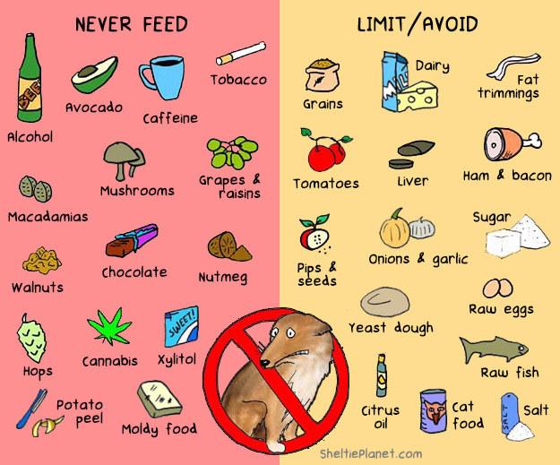 Contaminated Dog Food
