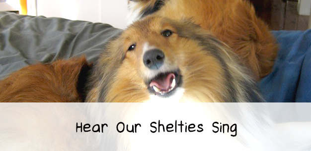 Hear Our Shelties Talk