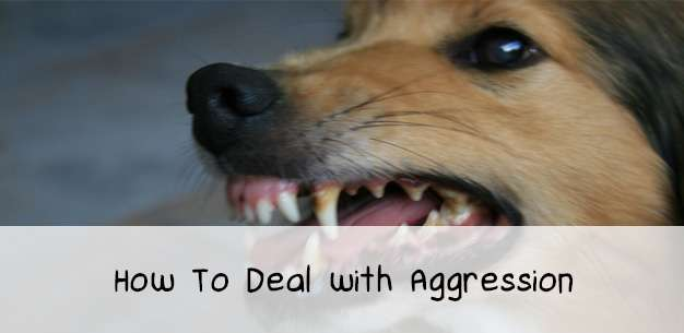 How to Deal with Dog Aggression