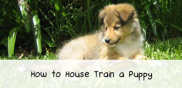 Housetraining a Puppy
