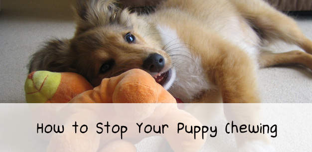 How to Stop Your Puppy Chewing