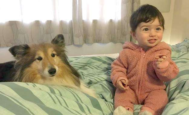 Our Sheltie Piper and 6-Month-Old Baby Kea