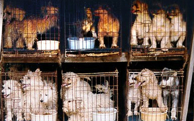 Most pet store puppies come from legal and illegal puppy mills