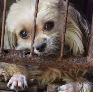 Puppy Mills Do No Genetic Screening
