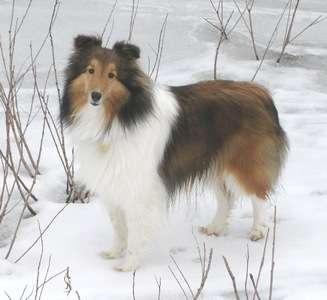 Sadie in The Snow
