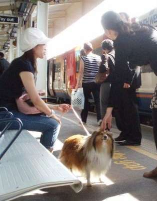 Sheltie at The Station