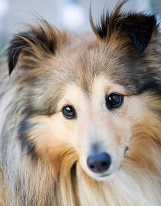Professional breeders specialize in one or two dog breeds