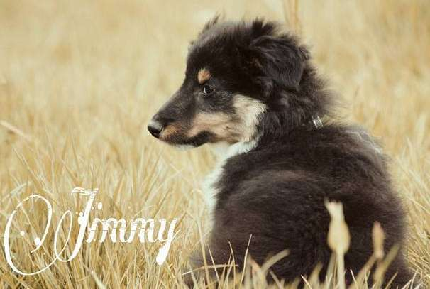 Jimmy. By Ilse Hoving