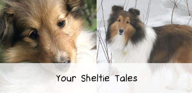 Your Sheltie Tales