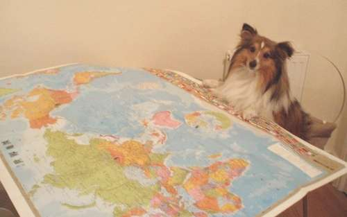 Sheltie Travel