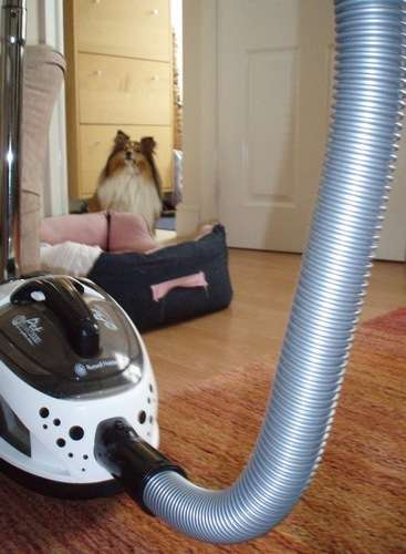 Sheltie Vs Vacuum Cleaner