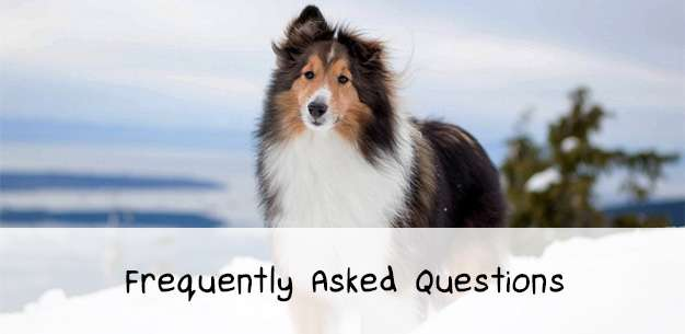 The Sheltie FAQ