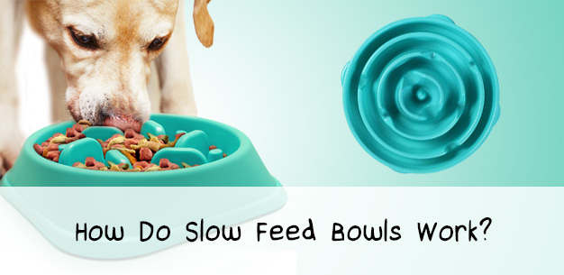 The Genius of Slow Feed Dog Bowls