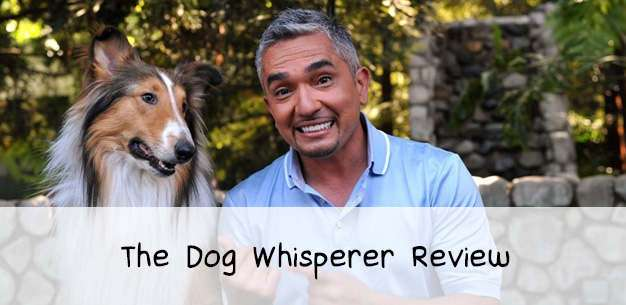 Dog Whisperer Review