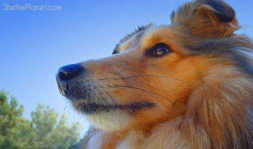 The Top 10 Most Intelligent Dog Breeds