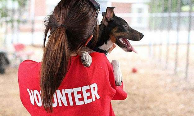 Volunteer at Animals Shelters