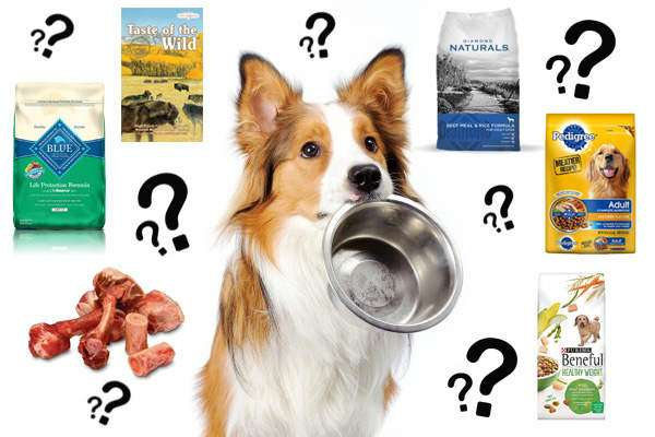 What is the best dog food?