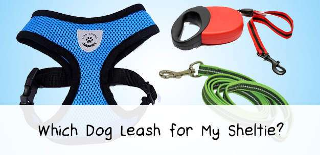 What is The Best Dog Leash?
